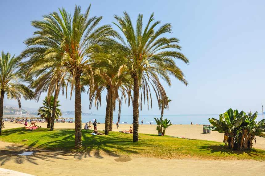 palmeras de la playa de la Malagueta la malegeta