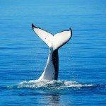 Avistamiento de Cetáceos en el Estrecho