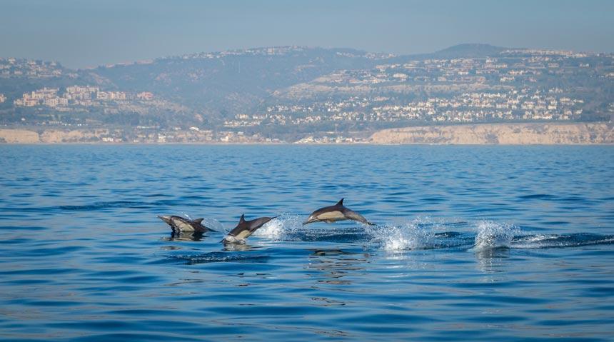 Dolphins-in-Estrecho-de-Gibraltar,-Tarifa