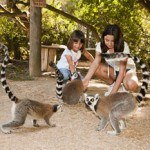 Centro Zoológico Lloc de Menorca