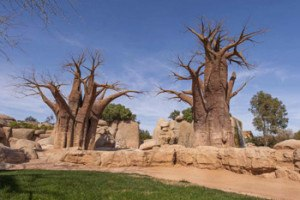 Imprescindibles de Valencia parque con animales de Bioparc de Valencia