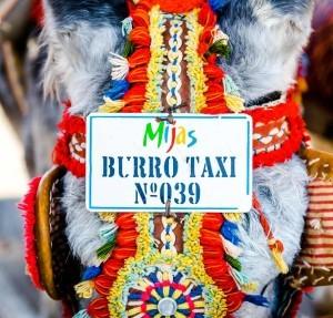 burro taxi en Mijas