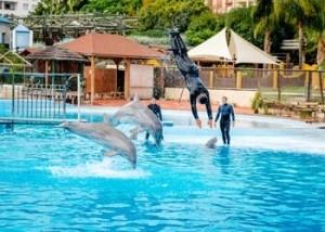 delfines-en-el-delfinario-selwo-de-benalmadena