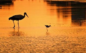 aves en el parque natural dels aiguamolls de l'emporda