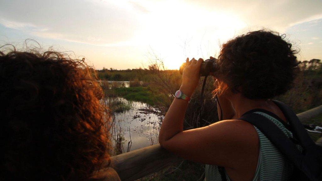 observando aves en el parque natural els aiguamolls en la Costa Brava
