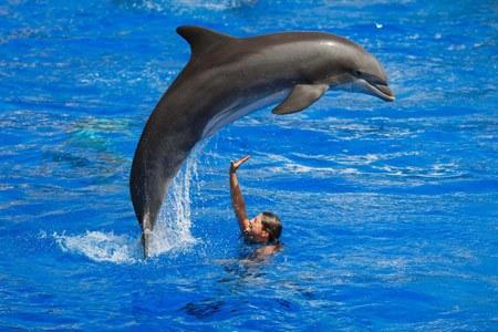 delfines haciendo acrobacias en el parque acuatico Marineland de Palma de Mallorca