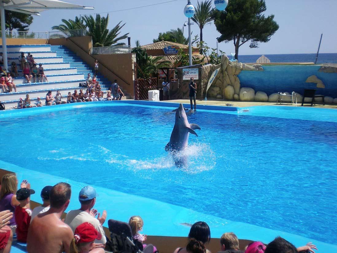 Delfines haciendo piruetas en el parque acuático Marineland de Palma