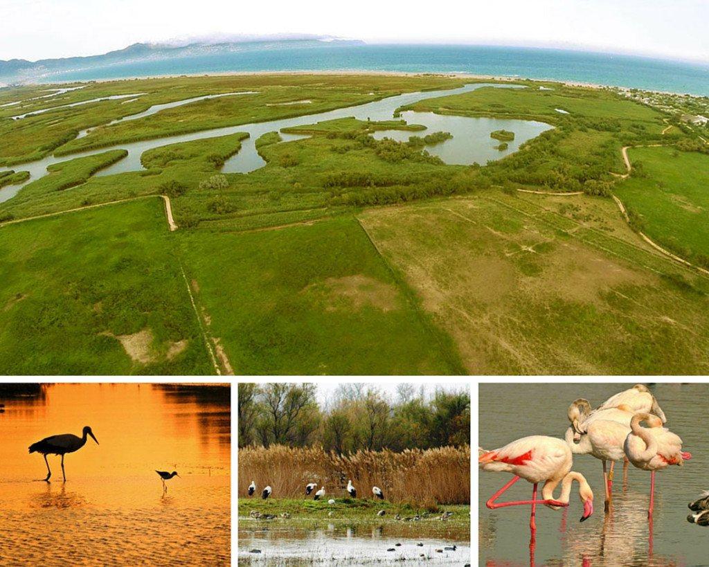 varias fotos del parque natural dels aiguamolls en la costa brava