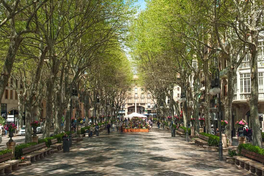 paseo del barrio Es Born en Palma de Mallorca