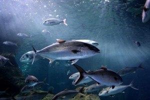 Imprescindibles de Roquetas de Mar peces del acuario de Roquetas de Mar