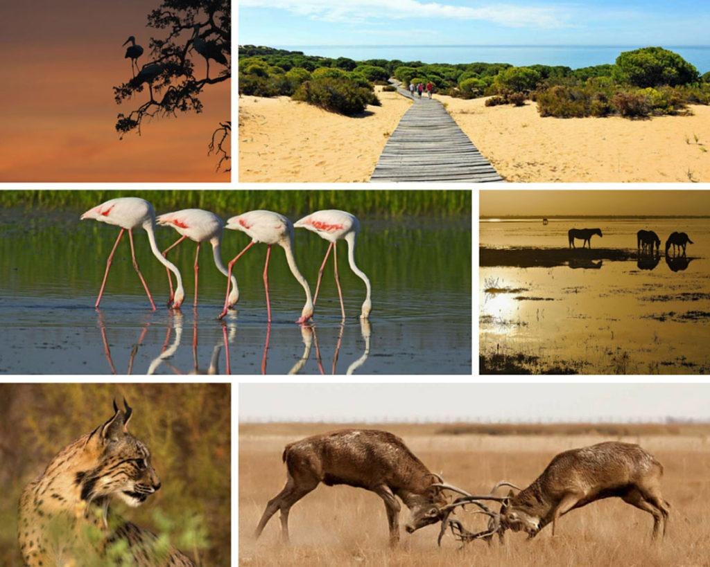 Animals from Doñana Natural Park