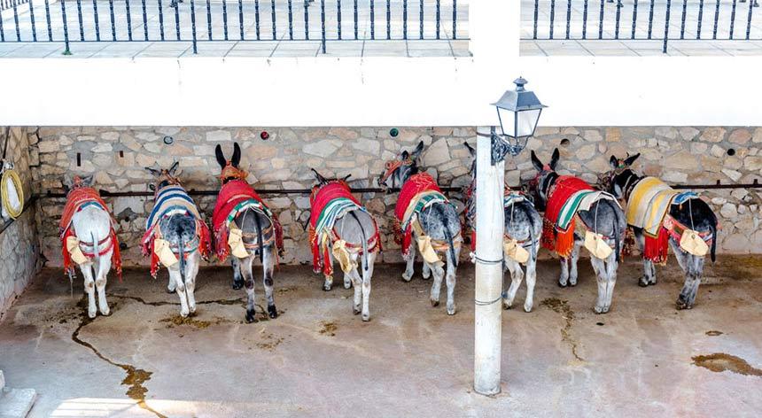 Burro-taxi-Mijas,-Costa-del-Sol,-Andalucia-2