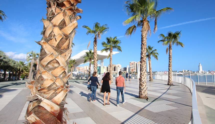 Quay 1 and the Palm Grove of Surprises in Malaga