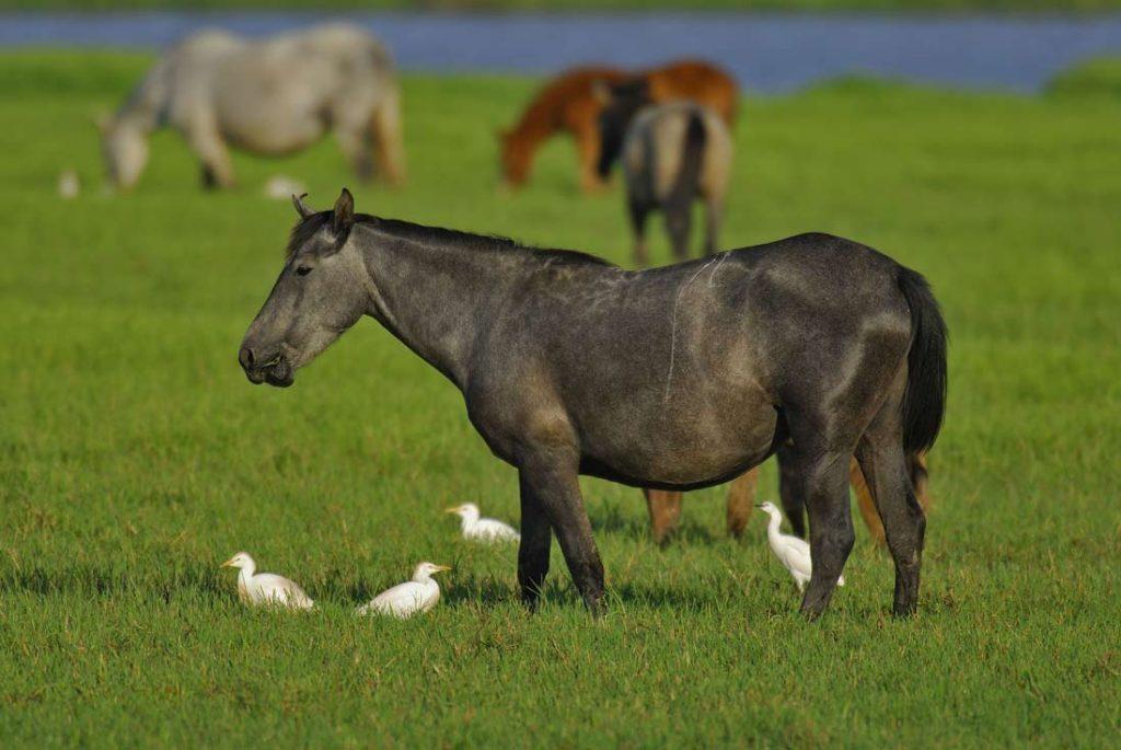 Wild horses in Doñana Natural Park