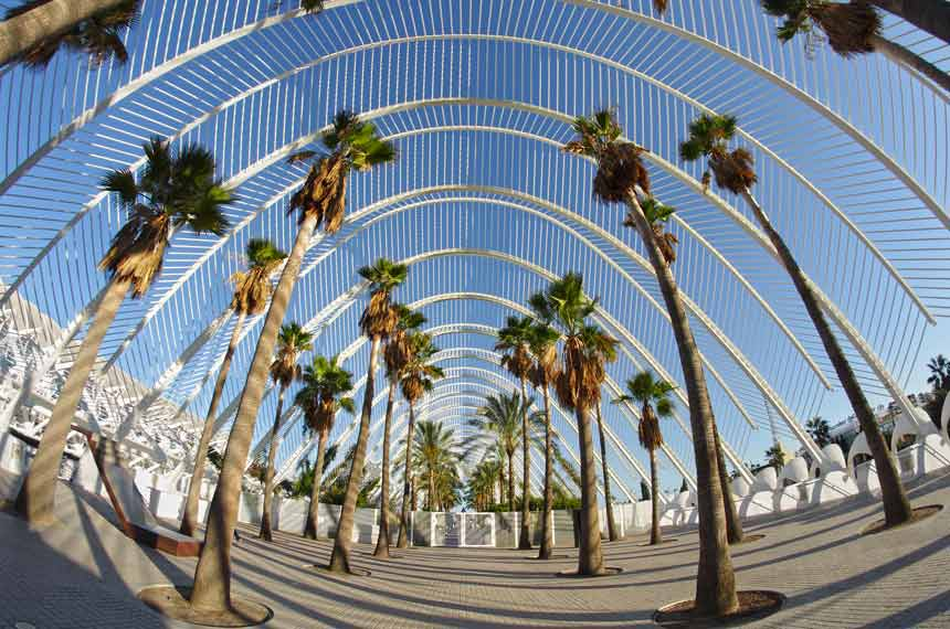 palm-Alley-the city of Arts and science in Valencia