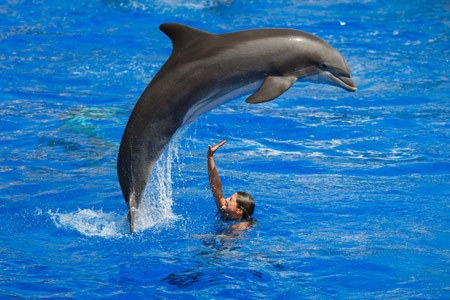 Spectacular jump of Dolphin in Marineland