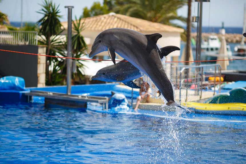 Marineland-aquatic-park-in-Palma-de-Mallorca