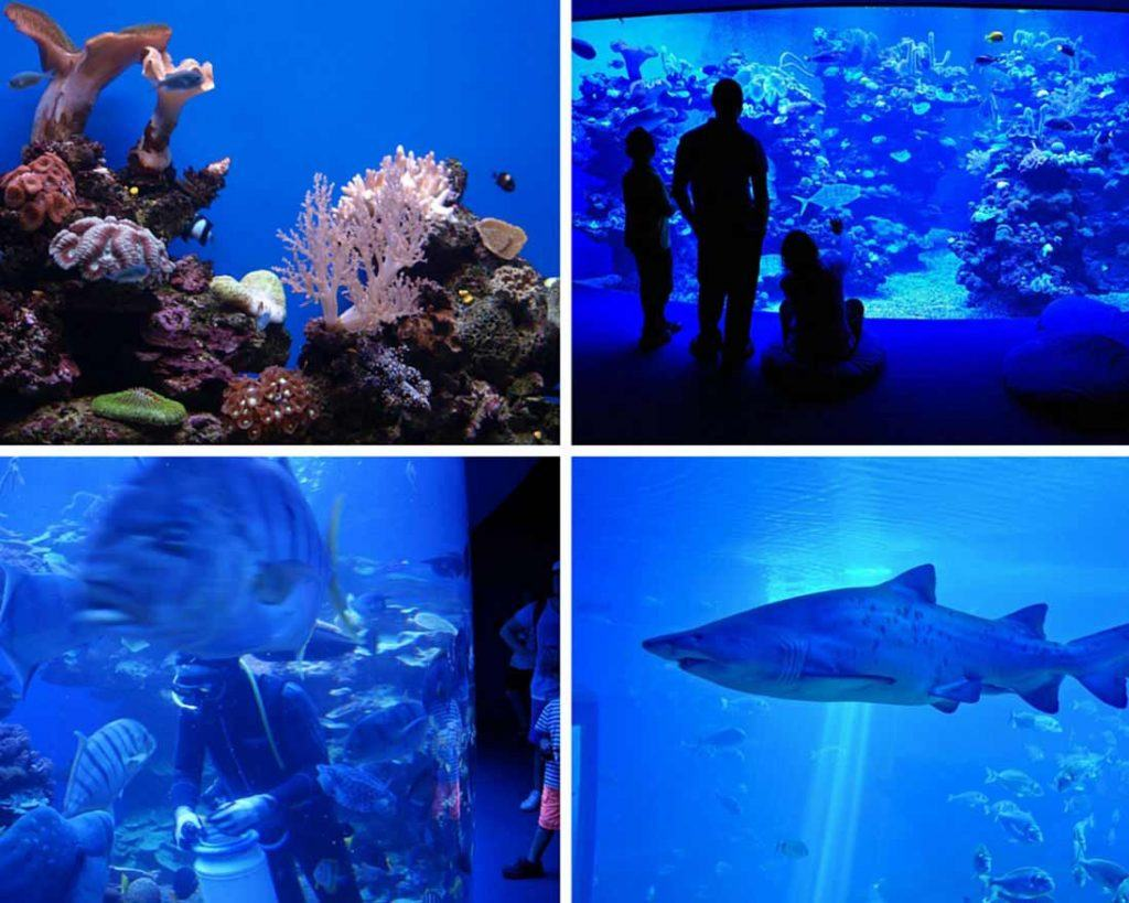 Sharks and coral of the Aquarium in Palma photo collage