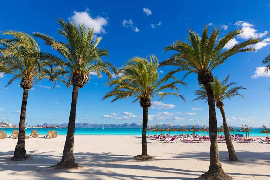 Palms-in-playa-de-Alcudia-beach