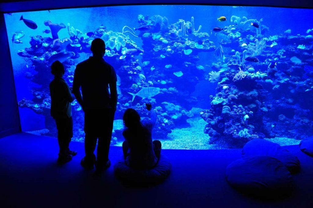 Palma de Mallorca acuarium