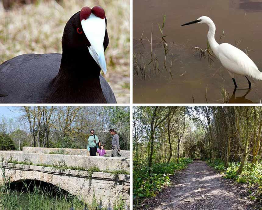 Albufera Natural Park photo collage