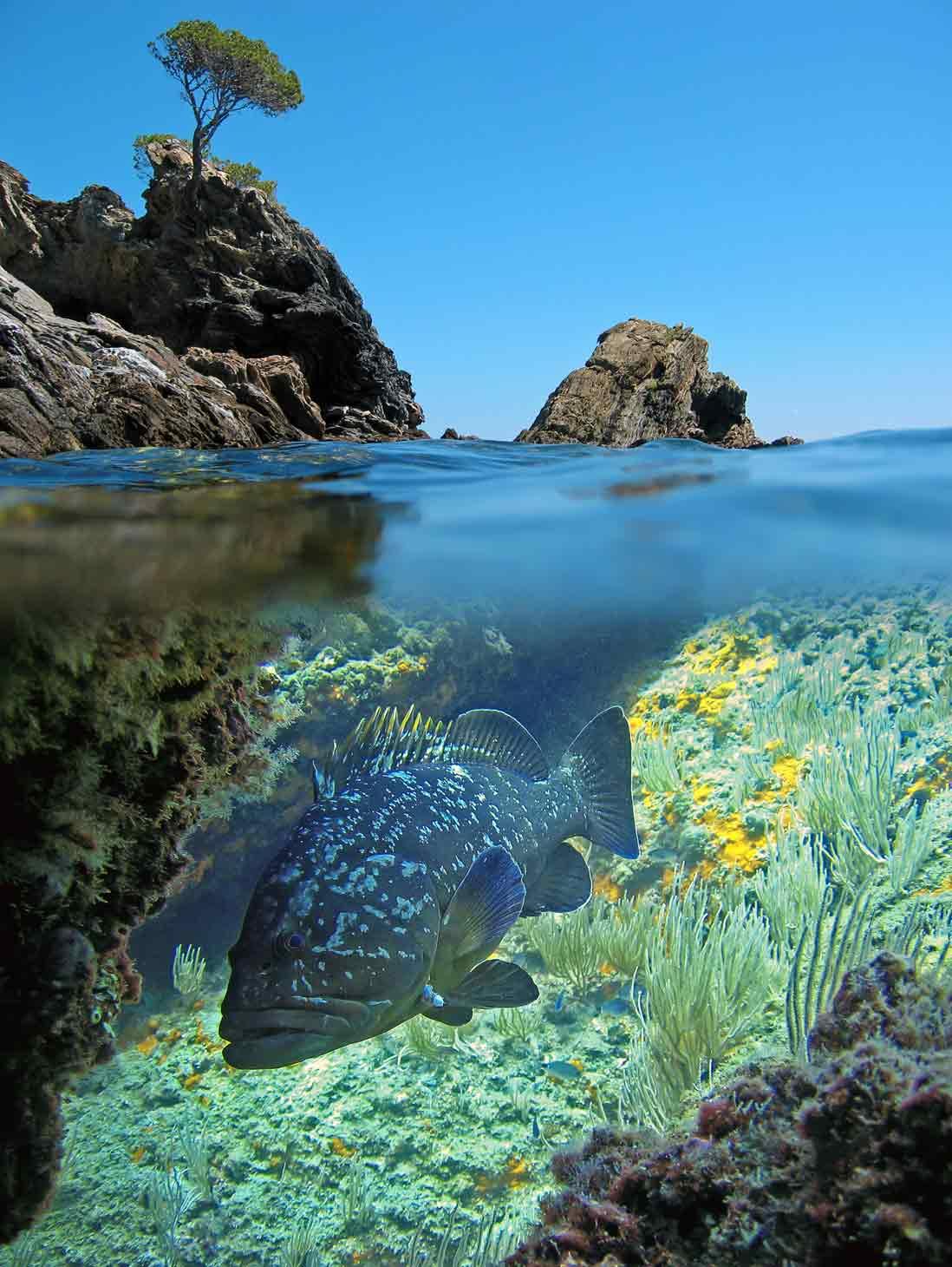 Cala Ferriol underwater