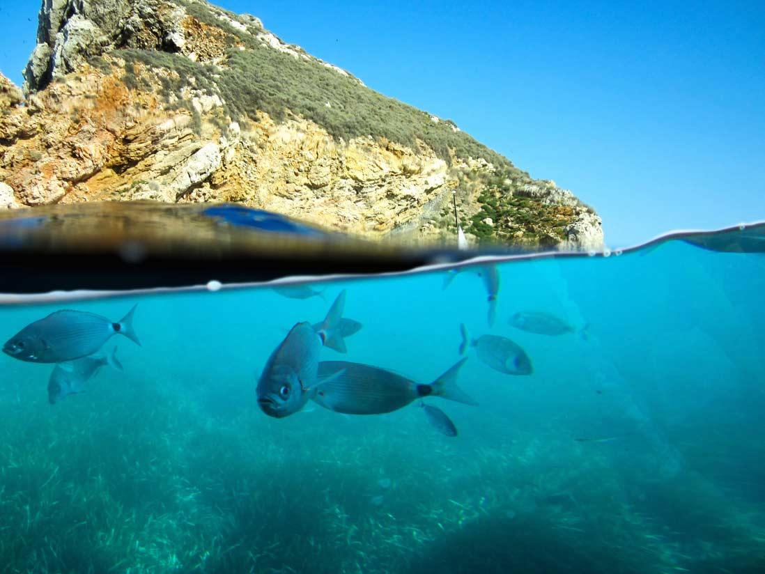 Illas Medas underwater