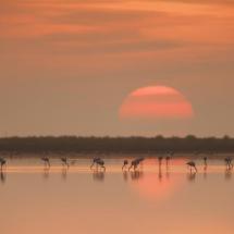 puesta-de-sol-en-el-delta-del-ebro-2