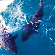 tuna-tour-en-ametlla-de-mar-11