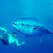 tuna-tour-en-ametlla-de-mar-7