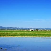 arrozales-del-delta-del-ebro