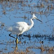 fauna en el Delta del Ebro