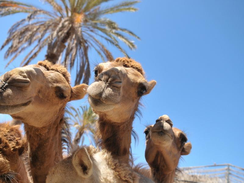 que hacer en Fuerteventura en Semana Santa