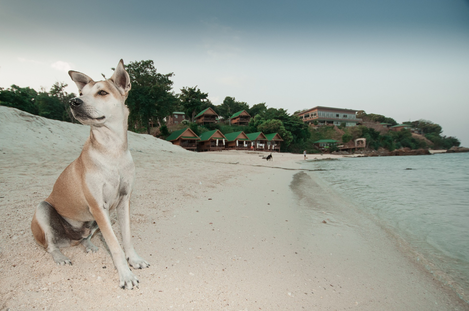 playas petfriendly tripkay
