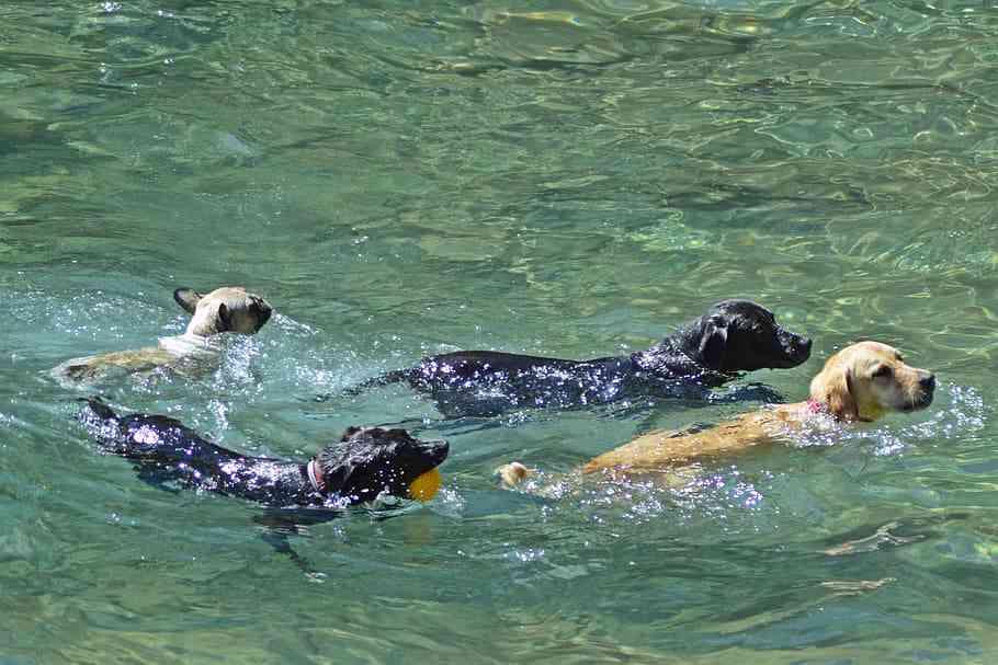 perros en la playa Tripkay