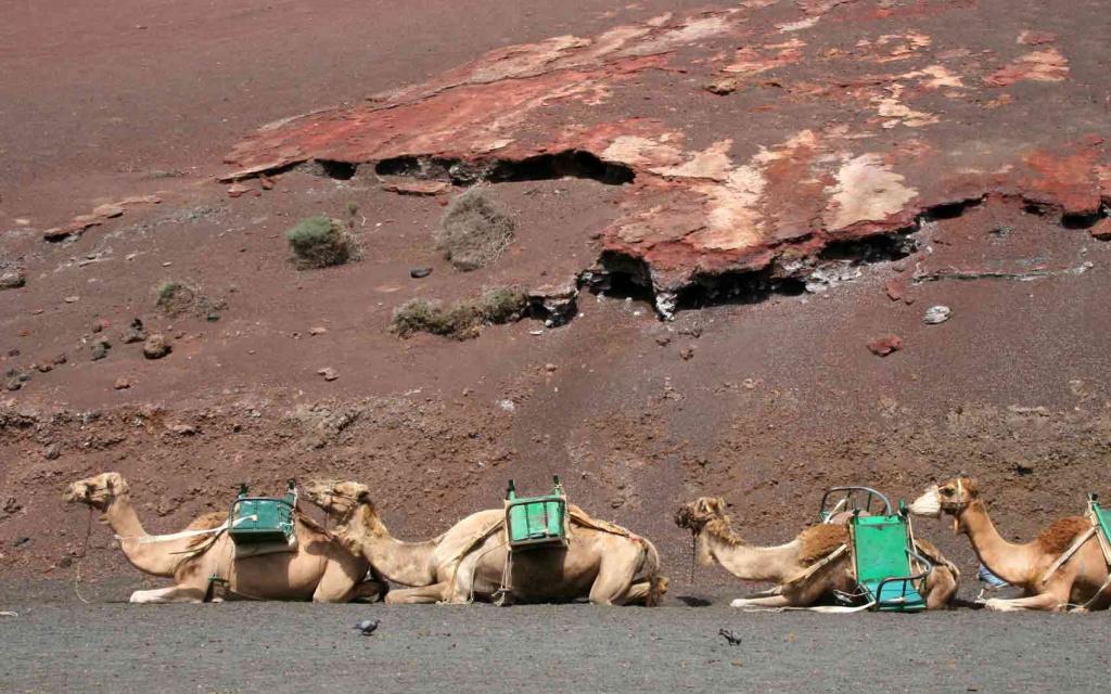 camellos canarias tripkay