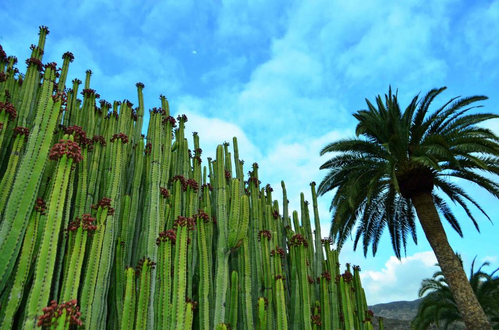 vegetacion gran canaria trpkay
