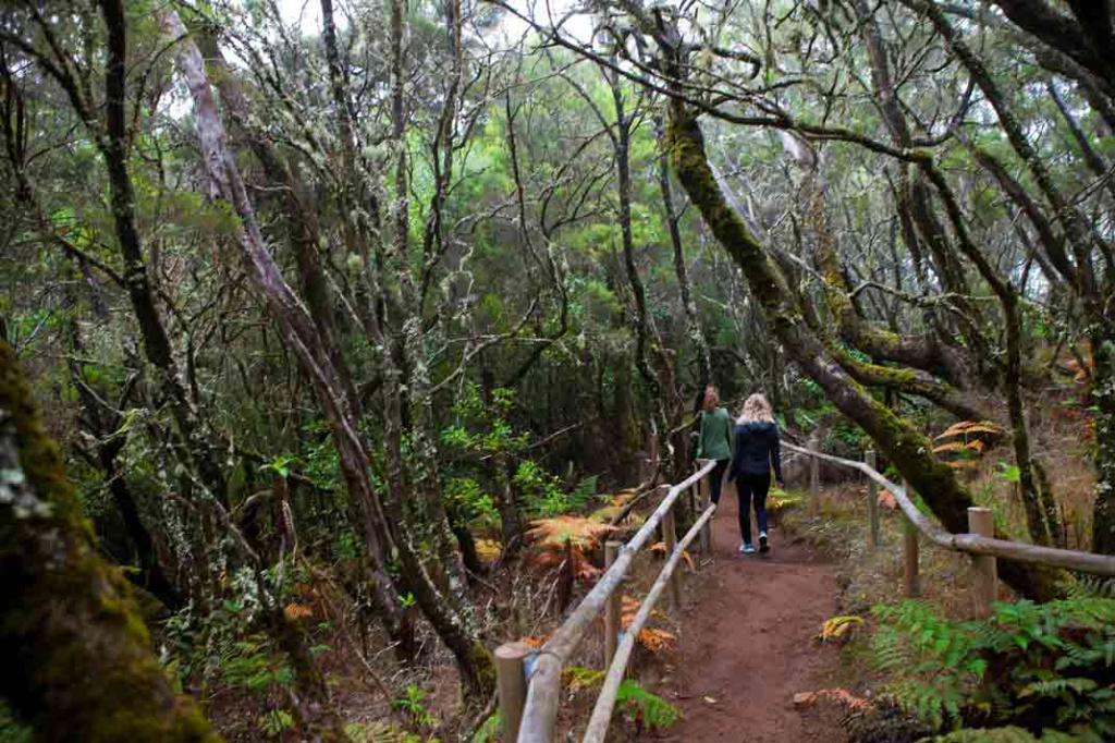 bosque cedros parque nacional garajonay tripkay